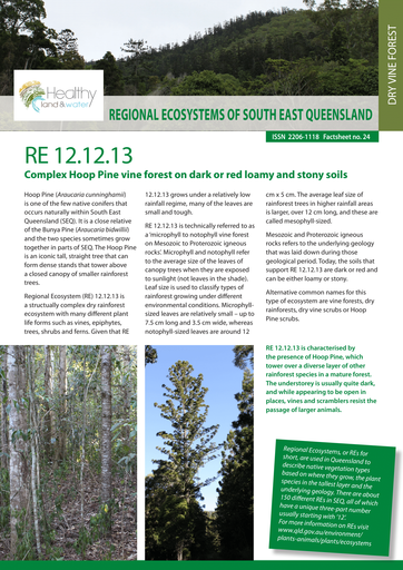 RE 12.12.13: Complex Hoop Pine vine forest on dark or red loamy and stony soils
