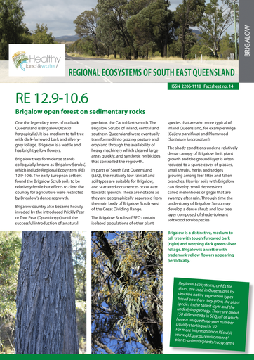 RE 12.9-10.6: Brigalow open forest on sedimentary rocks