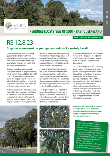 RE 12.8.23: Brigalow open forest on younger volcanic rocks mainly basalt