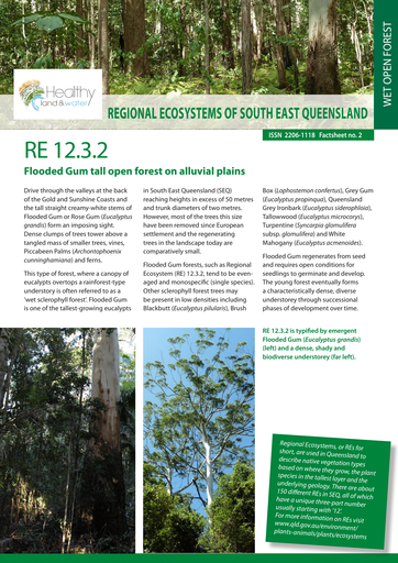 RE 12.3.2: Flooded Gum tall open forest on alluvial plains