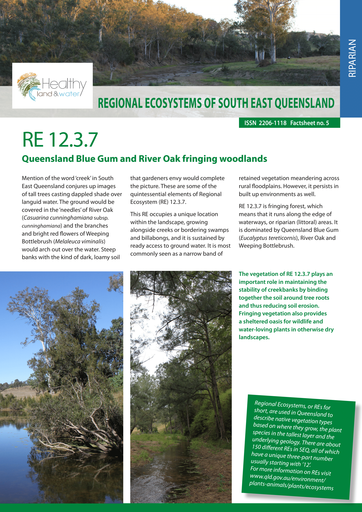 RE 12.3.7: Queensland Blue Gum and River Oak fringing woodlands