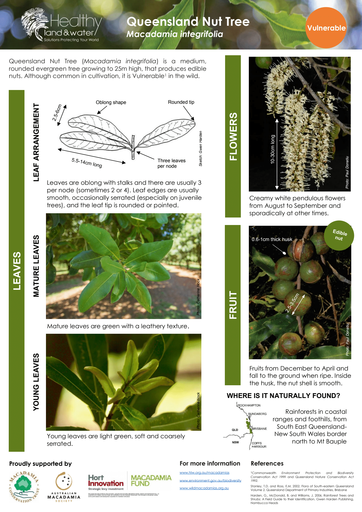 HLW Macadamia integrifolia identification fact sheet