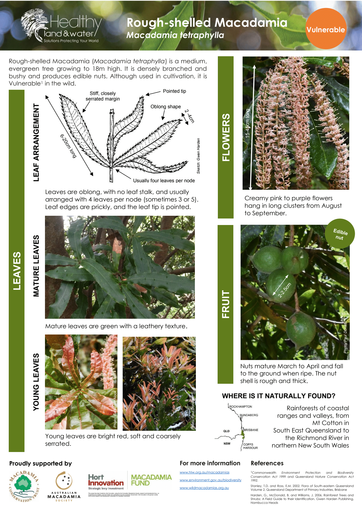 HLW Macadamia tetraphylla identification fact sheet
