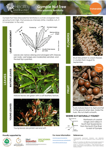 HLW Macadamia ternifolia identification fact sheet