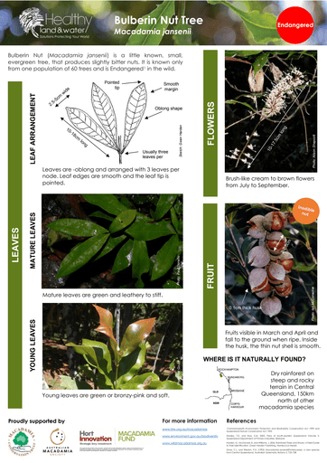 HLW Macadamia jansenii identification fact sheet