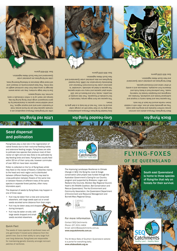 Fact Sheet Flying-foxes of South East Queensland