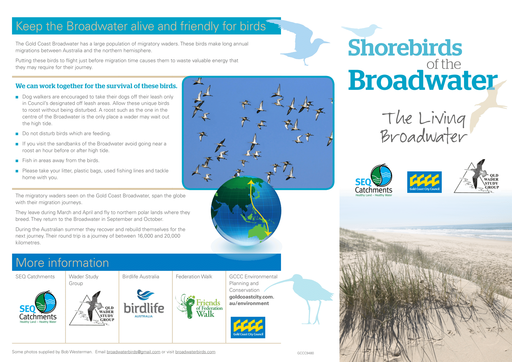 Shorebirds on the Gold Coast