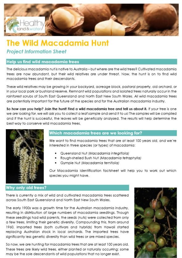 The Wild Macadamia Hunt Project Information