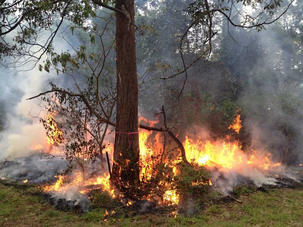 SEQ Fire and Biodiversity Consortium joins