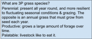 HLW2-Topics-3P Grass Species