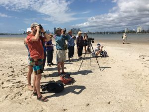 Bird watching Curlew Island