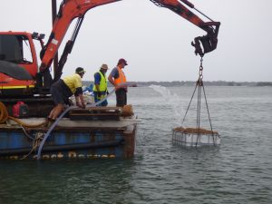 Deploying shellfish reef Pumicestone Passage